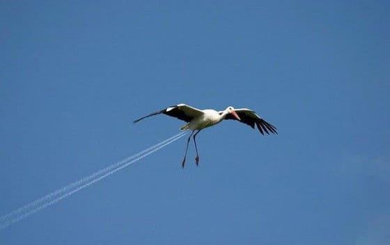 Sea Gull landing