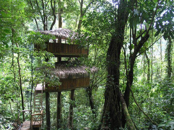 Finca Bellavista A Tree House Community