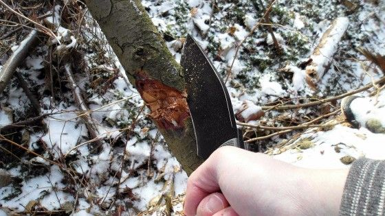 chopping a branch