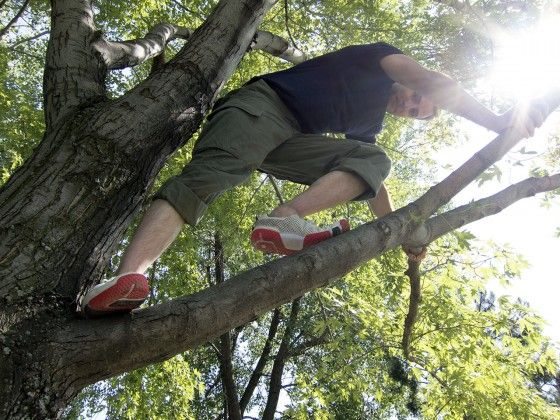 Chad climbing a tree