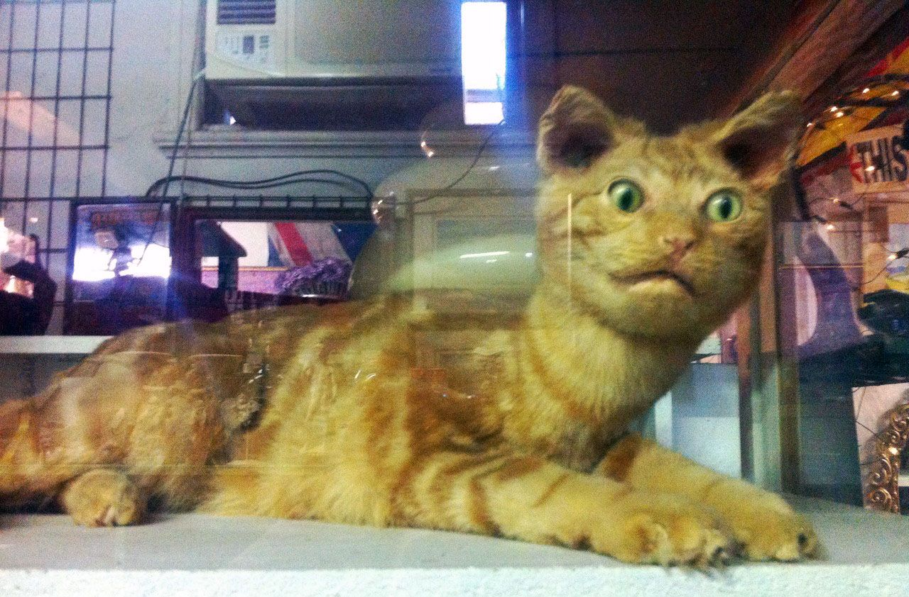 Terrible Taxidermy Animals The Fox Is Watching You