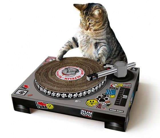 cat_scratch_dj_mat