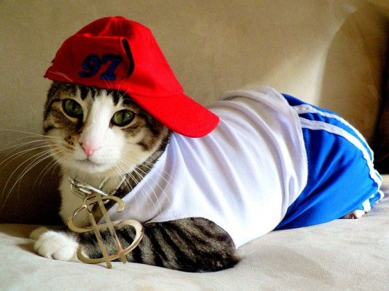 gangsta-cat