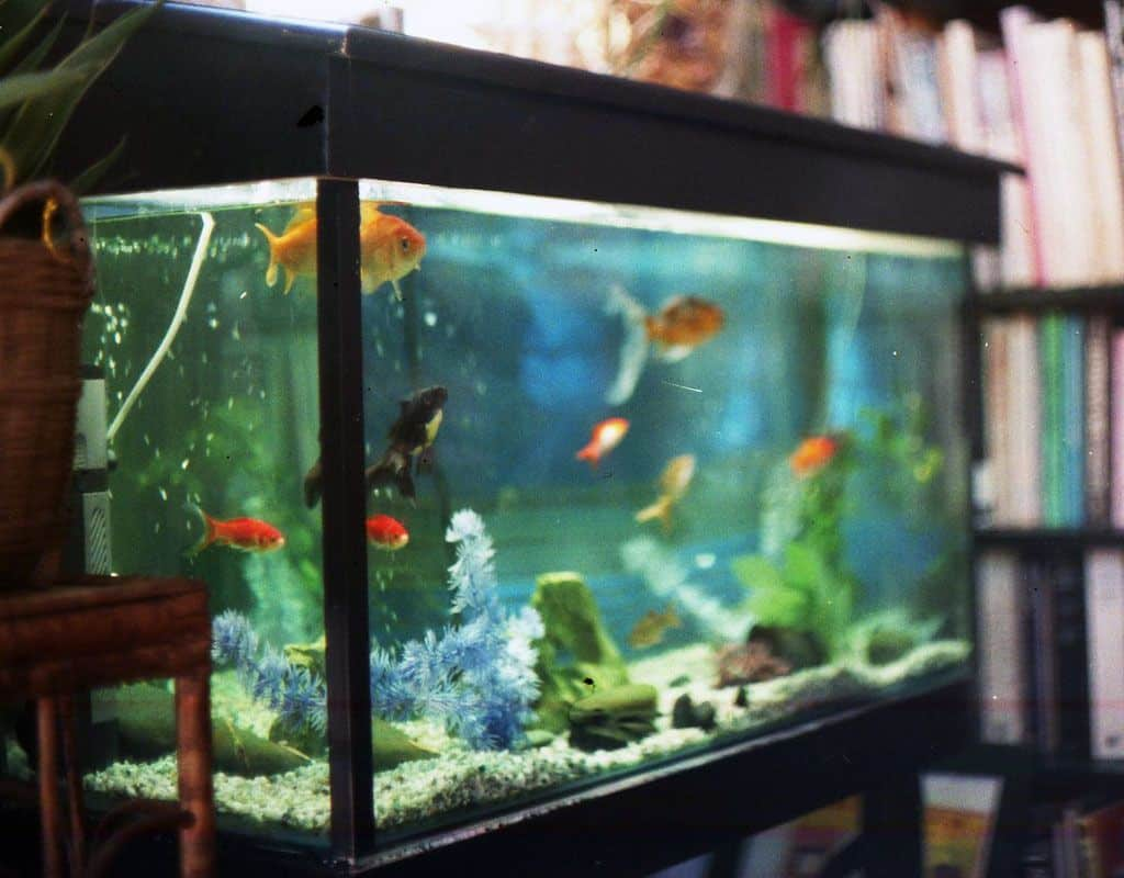 Pet Everyone Can Keep - On Creating a Home Aquarium - Unfinished Man