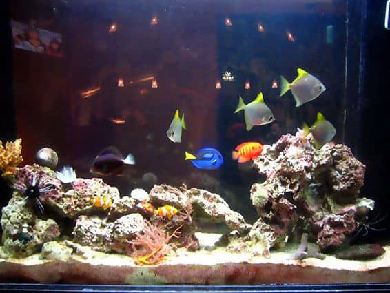 Easy Tank Pets : Pet Everyone Can Keep - On Creating a Home Aquarium - Unfinished Man