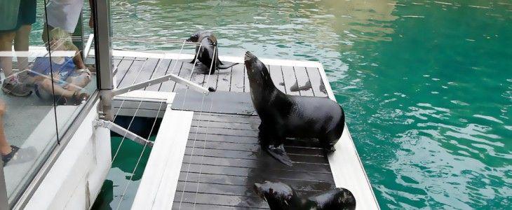seals-on-futurewood