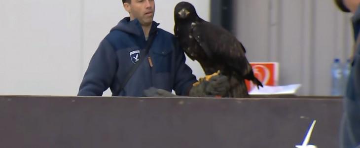 eagle-attacks-drone